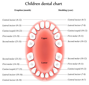 Tooth Eruption Chart - Pediatric Dentist in California, MD